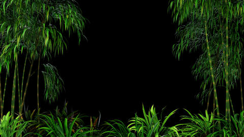 Looping Bamboo Forest Overlay Animation