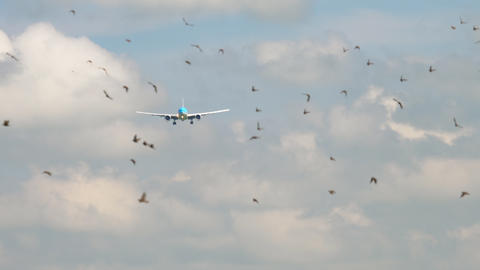 KLM Boeing 777 approaching GIF
