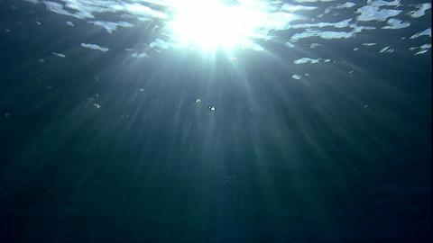 水面の太陽〜水中2 ビデオ