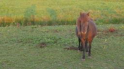 Horse in field,Tiel,Netherlands Footage
