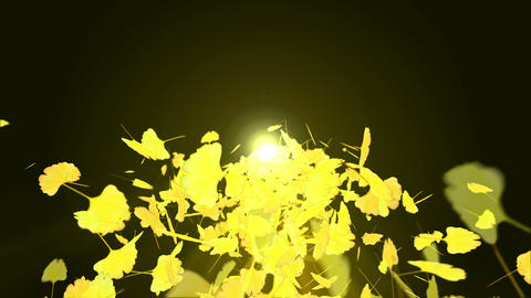 Spin of autumn leaves,Autumn,Gingko,CG Animation Animation