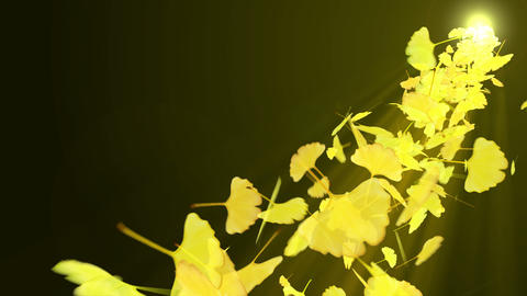 Spin of autumn leaves,Autumn,Gingko,CG Animation CG動画