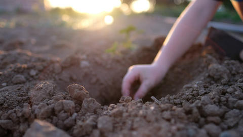 A person sowing a seed Live Action