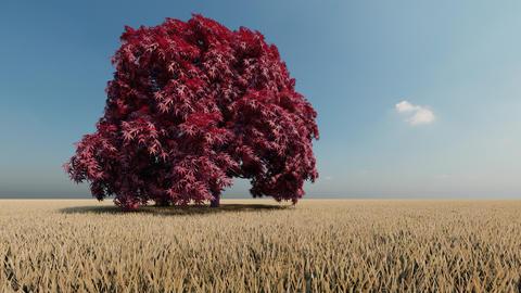 Green single tree in field in beautiful style. Tree, oak, leaf. Beautiful Live Action