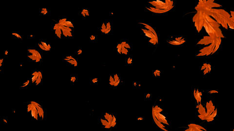Falling Maple Leaf Animation with Alpha Channel Animation