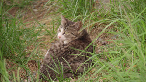 Animal cat V1-0001 Footage