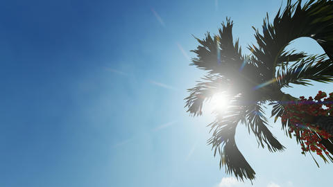 Abstract sun shining palm leaves for wallpaper design. Summer tropical leaf Live Action