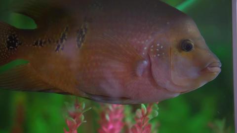 Beautiful aquarium fish. Aquarium with exotic fish Live Action