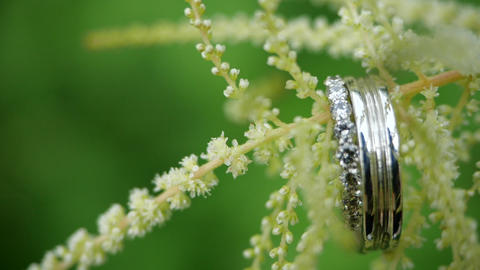 Close-up view of wedding rings hanging on a beautiful flower. Pair of beautiful Live Action