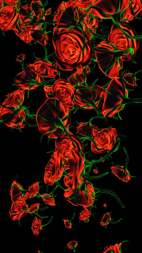 Raining Roses W/Alpha Channel Vertical Animation