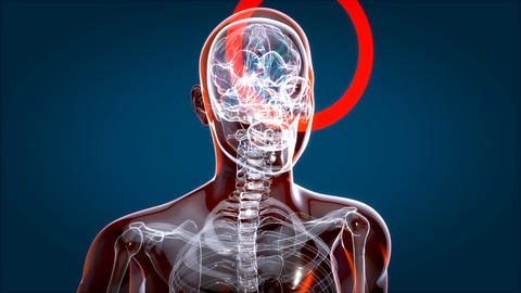 Human and brain xray, human anatomy, 3D Animated Animation
