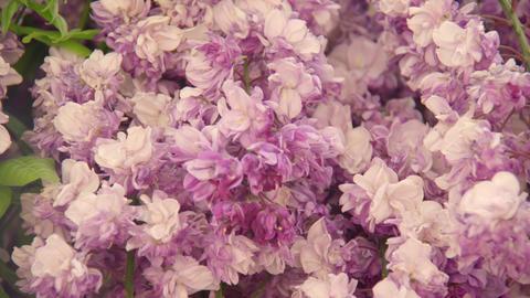Flower fuji V1-0026 Footage
