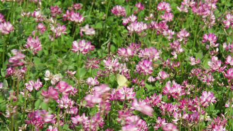 Flowers renge V1-0002 Footage