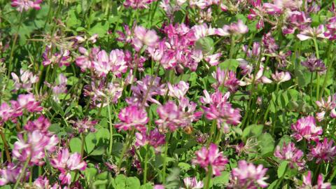 Flowers renge V1-0005 Footage