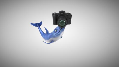 Fun dolphin - 3D Animation Animation