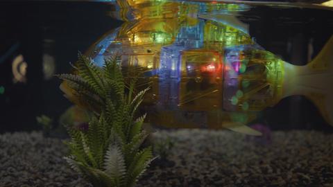 Fish robot swims in the aquarium 실사 촬영
