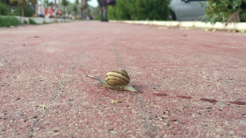 Snail Crawling on Sidewalk Live Action