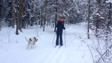 Woman Goes Skiing in the Winter Forest with a Dog Live Action