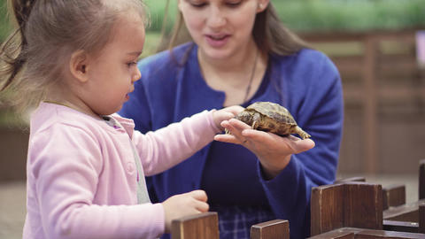 Cute asian child holding and playing with turtle. She is not scared to hold it Live Action