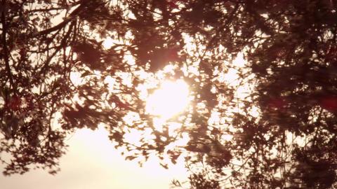 桜 ビデオ