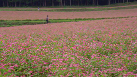 Flowers soba V1-0046 Footage
