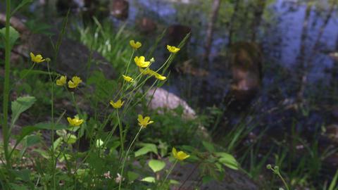 Flowers umanoshigata V1-0005 Footage