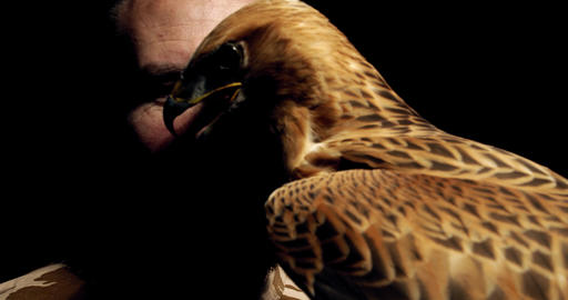 Close up of a trainer posing with his hawk, amazing wildlife, 4k Live Action