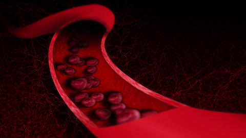 Human circulatory system. 3D loop animation of human blood vessel with red blood cells. Medical Animation