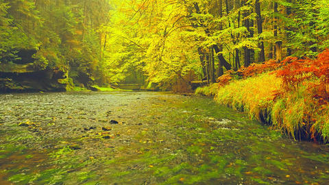 Autumn river. Fall natural landscape, colorful leaves on trees in park. Fall season. Outdoors, river Live Action