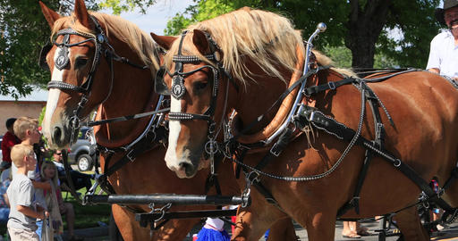 4th July Parade horse and carriage DCI 4K Footage