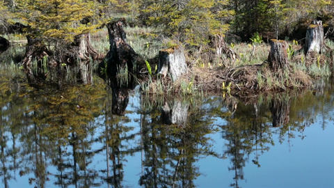Beautiful reflection Alaskan forest pond HD 7071 Live Action
