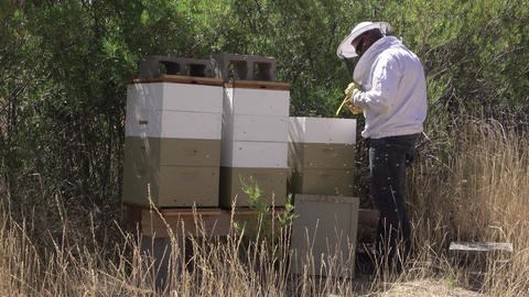 Beekeeper at beehive rural farm land bee swarm 4K Footage