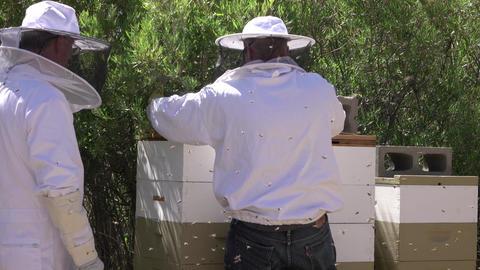 Beekeepers check honey in rural farm beehives 4K Footage