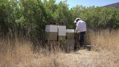 Beehives rural farm moutain valley beekeeper 4K Footage