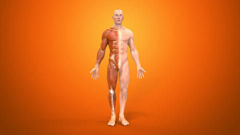 Anatomy Animation