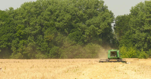 Modern Combine Harvesting Grain In The Field Live Action