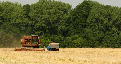 Old Grain Harvester Working In A Field Live Action