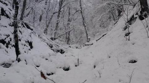 Magic snow forest and flowing ice stream. Drone view beautiful white woodland at snowy day. Amaing Live Action