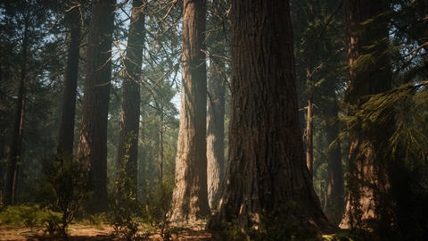 Sunset on the Giant Forest, Sequoia National Park, California GIF