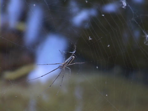 Water flows behind a spider attached to its web Footage