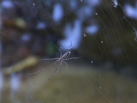 Water flows behind a spider attached to its web Stock Video Footage