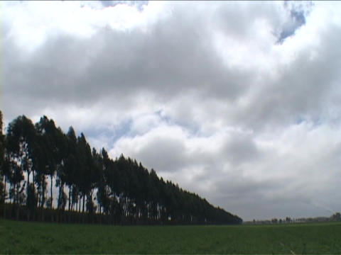Clouds pass over a field and some trees in England Stock Video Footage