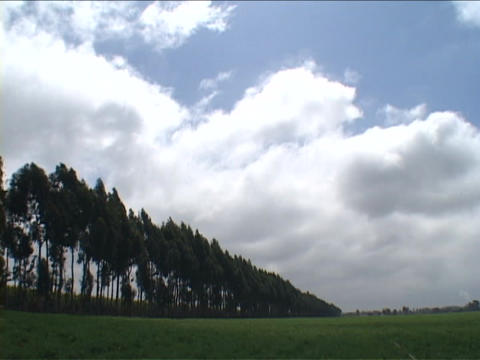 Clouds pass over a field and some trees in England Footage