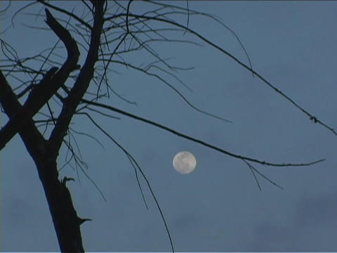 The moon rises behind a tree with clouds Stock Video Footage