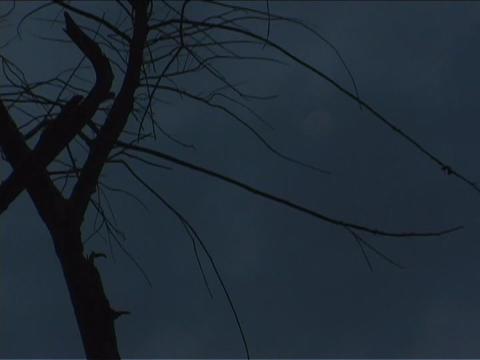 The moon rises behind a tree with clouds Footage