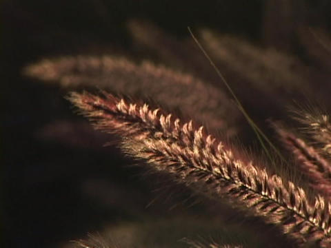 Wild grass blows in the wind Stock Video Footage