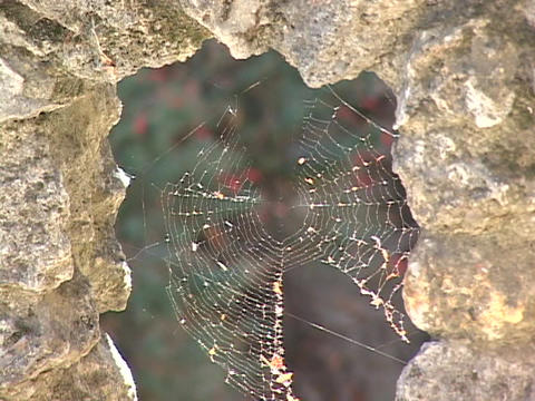 Light sparkles on a delicate spider web Stock Video Footage