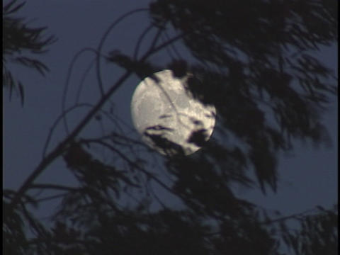 Branches wave in the wind in front of the moon Stock Video Footage