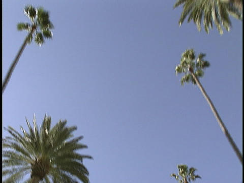 Street lights and palm trees stand in a row Stock Video Footage