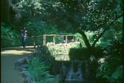 A retro man jogs through the forest Stock Video Footage